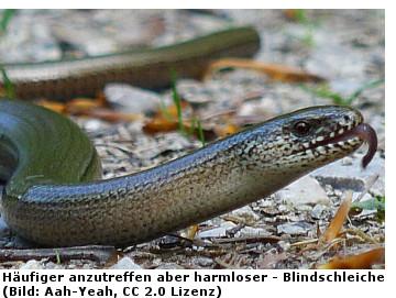 Schlangen, Biss, Schlangenarten, Côte d'Azur, Südfrankreich