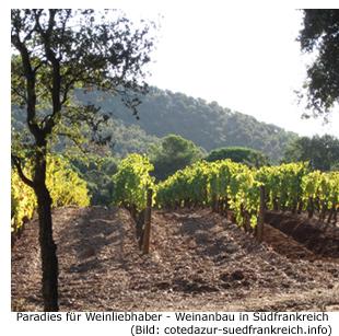 Weinbaugebiet Südfrankreich Cote d'Azur, Weinstock und Rebsorten, Weinprobe